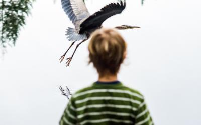 Pledge by June 4th for the 2021 Birdathon